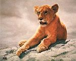 Lion Cub by Charles Frace