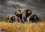 Power of the Serengeti by Charles Frace