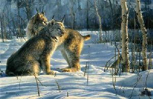 Lynx Light by Nancy Glazier