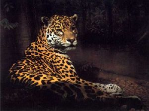 Jaguar by Charles Frace