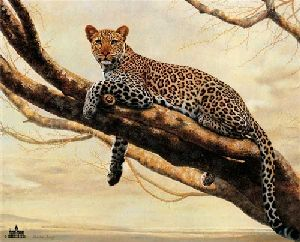 African Leopard by Charles Frace