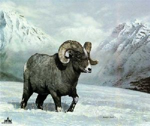 Bighorn Country by Charles Frace
