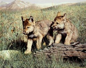 Pals (Wolf Pups) by Charles Frace