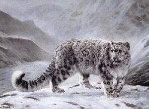 Snow Leopard (Fleeting Encounter) by Charles Frace