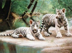 White Tiger Cubs by Charles Frace