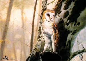 Barn Owl by Charles Frace